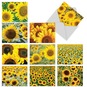 10  All Occasion Blank Cards Assortment - SUNNY SIDE UP M6042