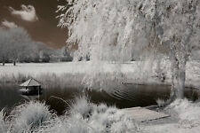 Nikon D70 infrared converted Camera 690nm standard Infrared Converted Camera IR