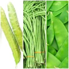 Chicharo, Sitaw & Sigarilyas Seeds Combo Pack Winged Bean Philippine Agriculture