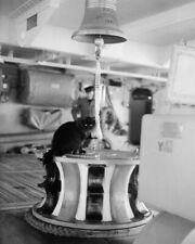 TIDDLES THE SHIPS CAT OF HMS VICTORIOUS 8X10 PHOTO PRINT 28012003073