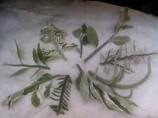 Collection 9 Different Named Pedilanthus Cuttings With One New Exclusive Clone