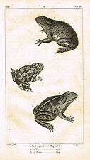 "Lacepede's Oeuvres du Comte - ""LE CRAPAUD - FROG"" - Lithograph - 1833"