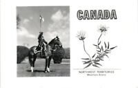 Vintage Postcard - Canada Northwest Territories Mountain Avens Horse #2084