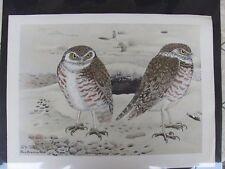 Original  Rex Brasher#378,378a  Hand Colored Bird Print Burrow. Owl #378REX2 DSS