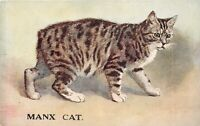 POSTCARD  CATS -  MANX CAT