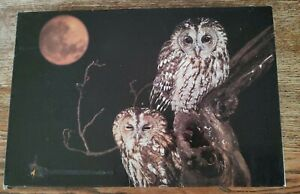 Two Wood Owls Natures Friends Jigsaw Puzzle Vtg Cardboard Complete 400 pc