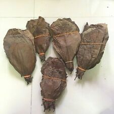 100++ Pieces Best Catappa Ketapang Indian Almond Leaves Shrimp Betta Discus