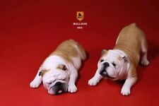 Mr.Z Bulldog 1/6 British Bulldog Couple Toys 2Pcs Pet Dog Display Animal Bd003