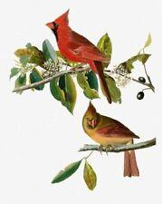 10% Off Scarlet Quince X-stitch Chart-Cardinal Grosbeak by John James Audubon