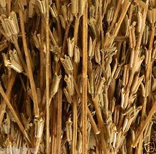 Natural dried Sesame Stems 500grams - christmas decoration