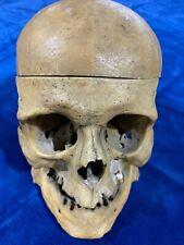 Ancien crâne Étude humain XIX Anatomie Cabinet de curiosité Faculté de Médecine