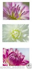 NEW PICTURE POSTCARDS ART CARD PRINTS OF COLORFUL FLOWERS 10x15cm
