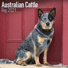 Australian Cattle Dog Calendar 2021 Premium Dog Breed Calendars