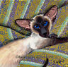 LARGE LIMITED EDITION SEALPOINT SIAMESE CAT ART PAINTING PRINT SUZANNE LE GOOD