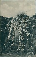 Ansichtskarte Berlin Königl. Botanischer Garten in Dahlem Steglitz 1912 (Nr.995)