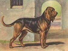 Bloodhound - Dog Art Print - Megargee Matted