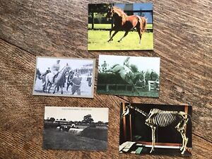 5 Horse Racing  Postcard - Mixed Lot Of Old, Used, Unused