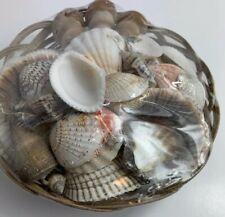 "6"" Wicker Basket of Assorted Seashells Home Decor New"
