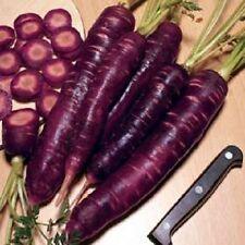 0.2g (appr. 160) purple carrot seeds PURPLE HAZE very nice unusual color