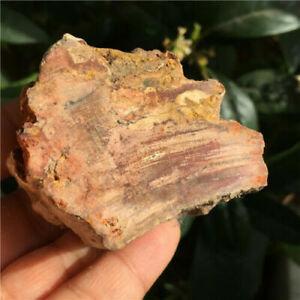 Hermosa Madera petrificada, fosilizada 167 grs