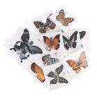 1pc Random Butterfly Specimen Folded Real Insects Wholesale Butterfly SpecLO