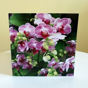 Greetings Cards Blank Floral Flowers Birthday All Occasions Notecard Square