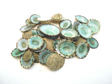 "Set of 12 Emerald Green Mexican Limpets (1/2""-1"") Beach Crafts Coastal Decor ."