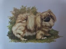 Pekinese Dog Breed Lithograph Collectable Art Print by Ole Larsen 1950's