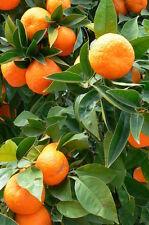 Huile essentielle Orange Douce pure et naturelle 50 ml