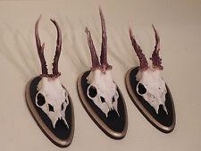 3 Cornamenta de corzo Juego Ciervo trofeos caza Regalo Idea Decoración #22.602