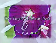 Hollyhock Deep Purple Flower Seeds