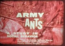 16mm film Army Ants Study In Social Behavior horror insects creepy farm 1960's
