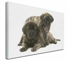 More details for bullmastiff dog puppies x-large 30