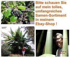 winterhart frosthart Garten Samen Obst exotische Pflanzen ARONIA BAMBUS BANANE