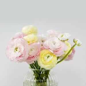 Ranunculus Bulbs Pastel Mix