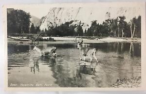 RPPC Deer Yosemite National Park Calif Postcard 1940s Stream Crossing