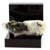 Chalcopyrite sur Quartz. 130.1 ct. Mont-Roc Mine, Tarn, France. Ultra Rare