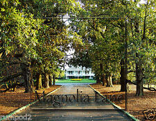 Golf  Poster/Photo - Magnolia Lane Augusta National/ 17x22 inches