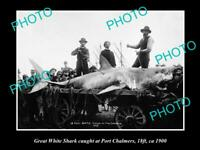 OLD 8x6 HISTORICAL GAME FISHING PHOTO OF GREAT WHITE SHARK CATCH c1900 NZ