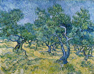 Olive Trees by Vincent Van Gogh Giclee Print on Canvas
