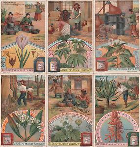Original Liebigbilder Serie Nr. 699 von 1906 - Arzneipflanzen - guter Zustand