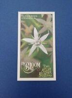 2019 Topps Allen & Ginter In Bloom Mini Flowering Crassula #IB-10 A&G Jade plant