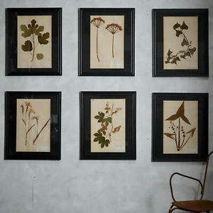 Antique 19th Century French Flower Pressings Herbarium Mounted In Frames