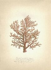 Sea Ocean Reef BRANCH CORAL original MEDIUM SIZE handworked SIGNED art print