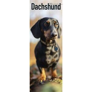 Dachshund Calendar 2022 Dog Slimline SLIM 15% OFF MULTI ORDERS!