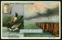 Bergeronnettes Wagtails)Birds Migrating 1920s Trade Ad Card