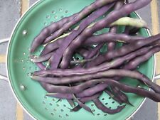 Blauhilde Pole Bean Seeds- Heirloom Variety- 20+ 2018  Seeds  $1.69 Max Shipping