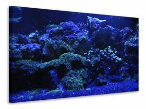 Leinwandbild Korallenriff in blau