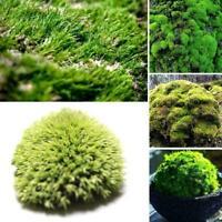 200Pcs/Set Moss Seeds Home Bonsai DIY Decor Grass Seeds Plants Potted Seeds S8P7