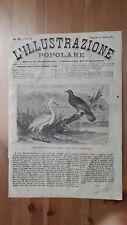 1873 Illustrazione Popolare: Nuova Caledonia Piccione Notu e Gru Bianca